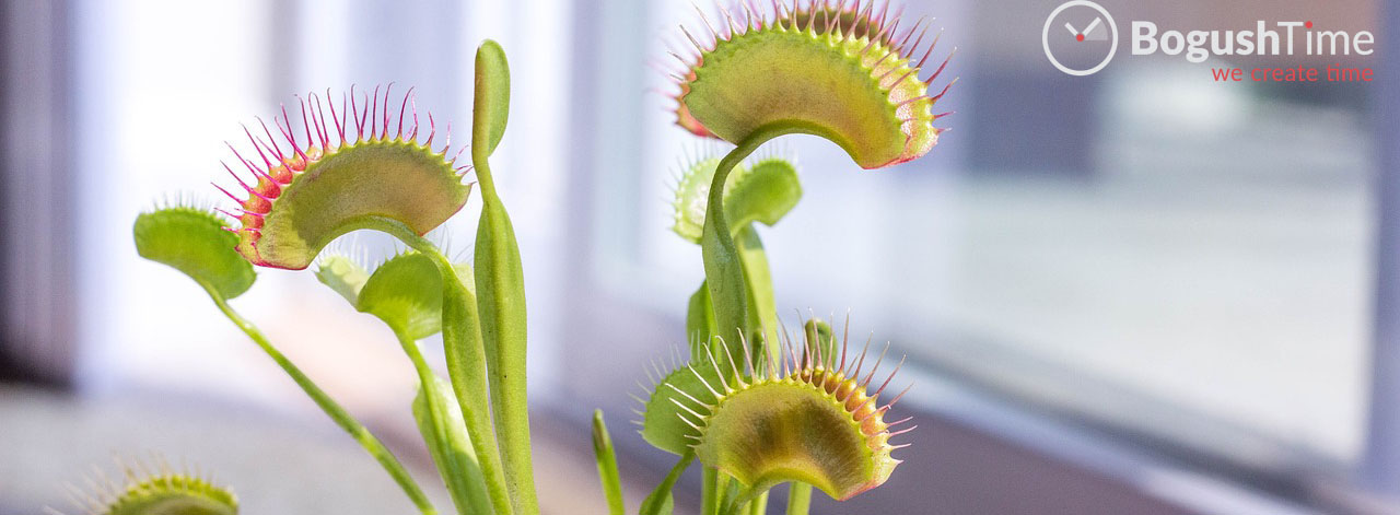 venus-fly-trap-2403031_1280.jpg